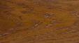 White Oak - Cupreous